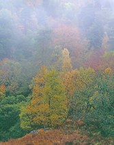 Misty Trees in Autumn thumbnail